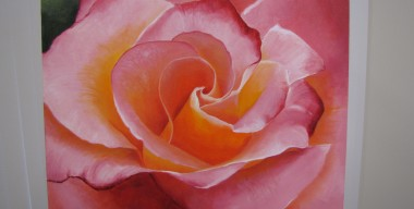 Pink Rose by Sylvia Stanford