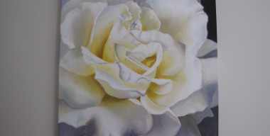 White Rose by Sylvia Stanford