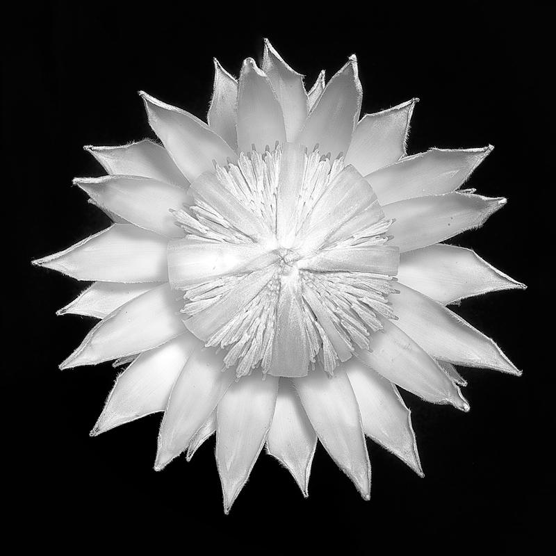 Black & White – Australian Institute of Professional